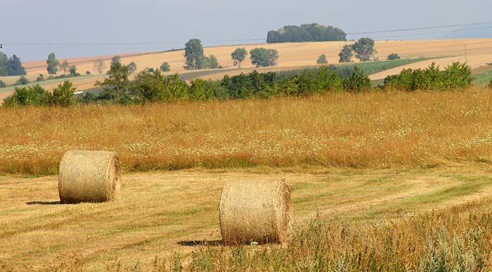 Obawiasz się, iż chwasty mogą zniszczyć twoje uprawy rolne?